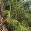 View The Costa Rica, Nicaragua og El Salvador Album